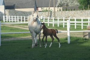 EL MEDISA with filly by Medalion